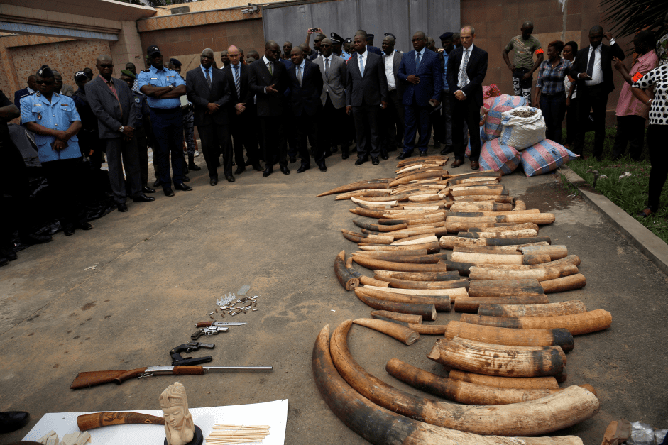 Thomson Reuters Structure Reporting the Illegal Web Sell Wildlife 2018 for reporters from Africa and Asia (Fully-funded to Thailand)