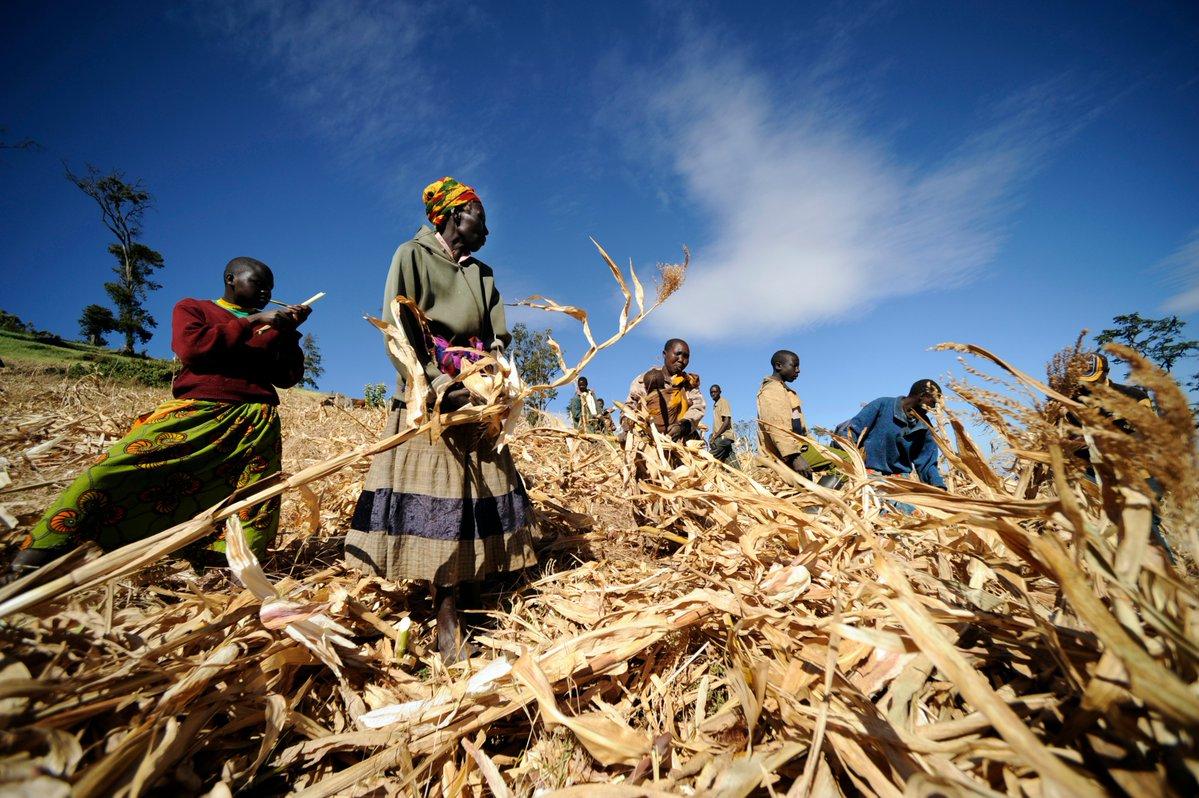 The World Food Program (WFP) Development Accelerator/Cargill 2019 International Development Difficulty for No Cravings