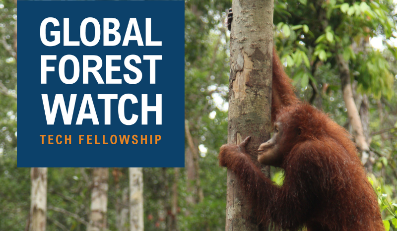Global Forest Watch Innovation Fellowship 2019 ($ 6,000 stipend and journey to Washington DC)