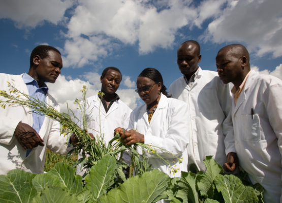 African Ladies in Agricultural Research Study and Advancement One World Fellowship 2019