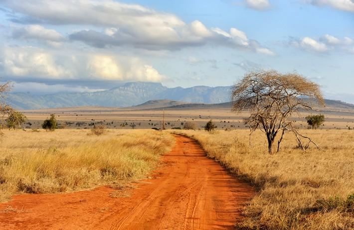 British Ecological Society Ecologists in Africa Grant 2019 (Approximately ₤ 8,000)