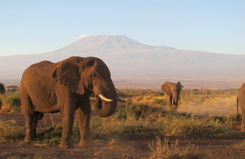 Internews Earth Journalism East Africa Wildlife Journalism Media Grants 2019