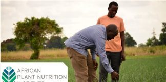 APNI Young African Phosphorus Fellowship 2020 for Early Career Scientists Researching Phosphorus Management in African Agriculture ( $5,000 Prize)