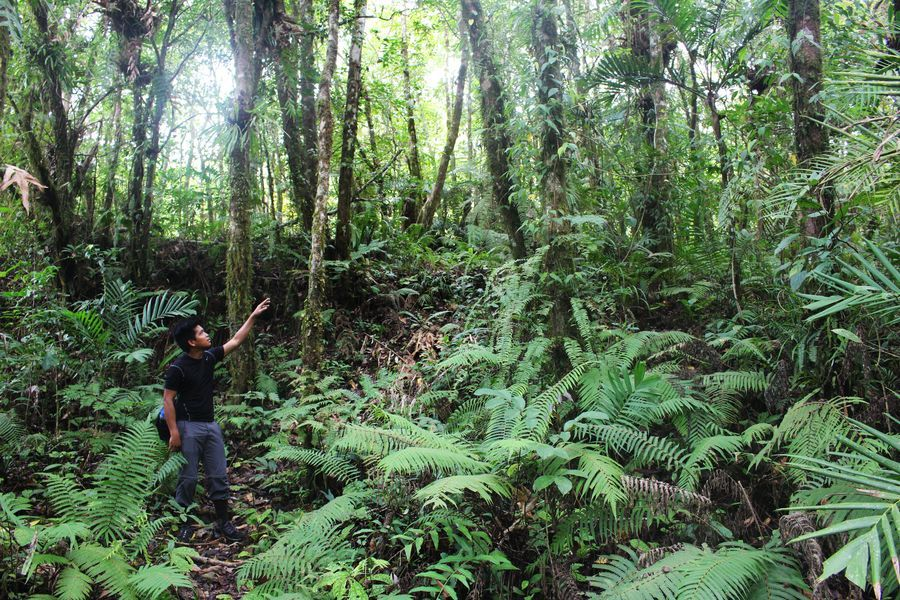 Requests for Proposals: National Geographic Stories of Tropical Rainforests (up to $70,000)