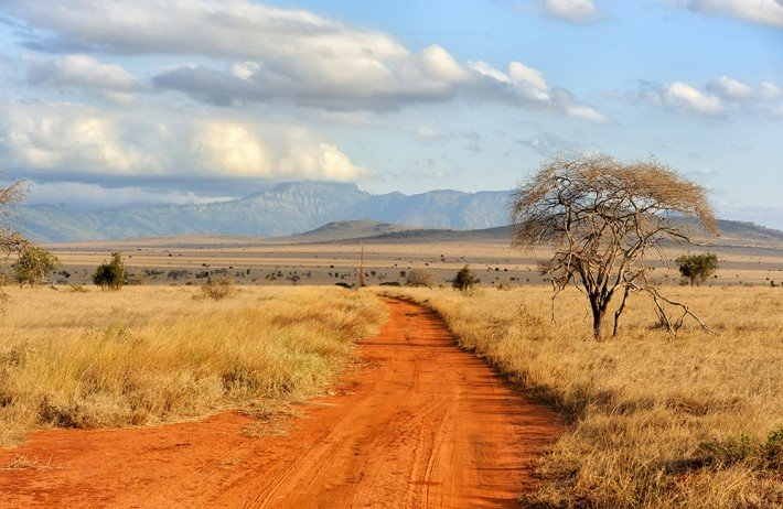 British Ecological Society Grants 2020 for Ecologists in Africa – Round 2 (up to £8,000)