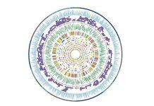 Smithsonian Biodiversity Genomics Postdoctoral Fellowship Program 2020/2021 (Funding available)