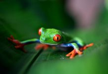 Earth Journalism Network Biodiversity Media Grants 2020 (up to US$48,000)
