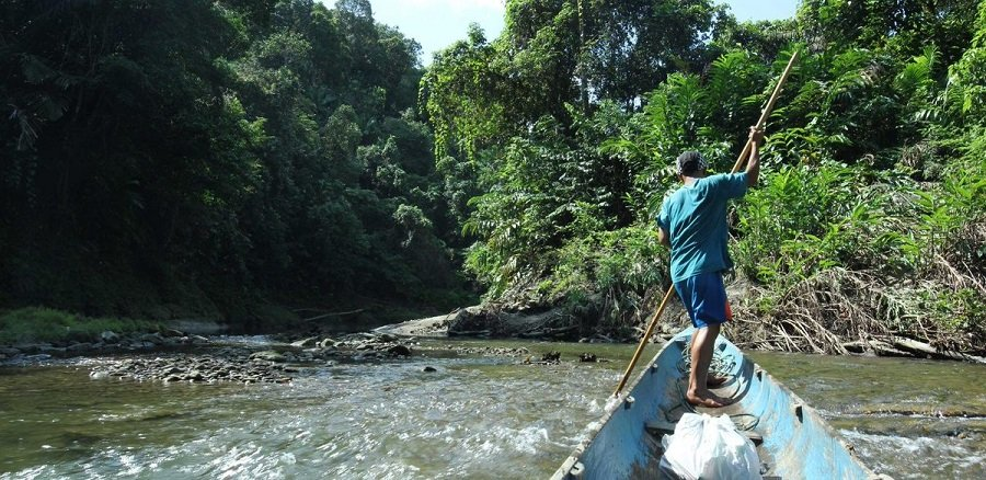 Pulitzer Center/Southeast Asia RJF Special Call for Proposals on Forest Restoration 2020