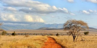 British Ecological Society Grants 2021 for Ecologists in Africa (up to £8,000)