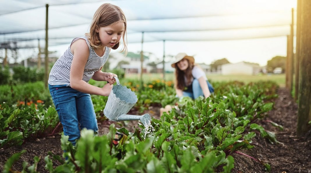 IFT Seeding the Future Global Food System Challenge 2021 (Up to $250,000)