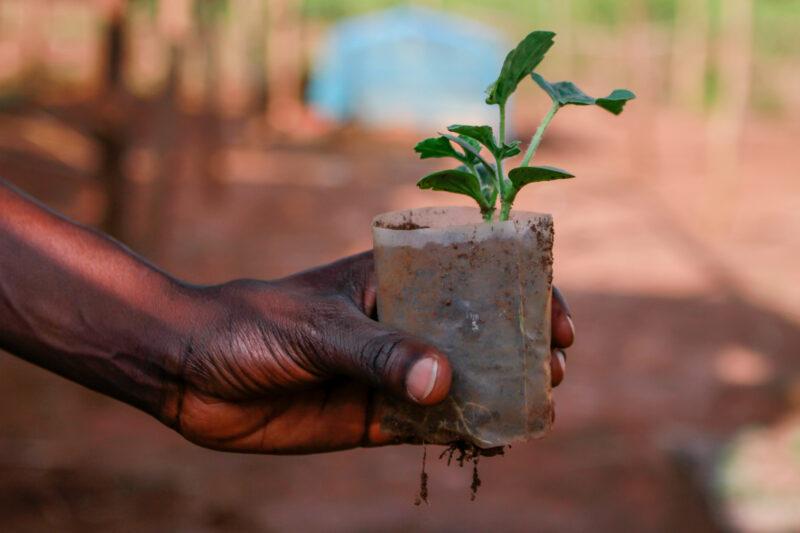 Lemonaid & ChariTea Foundation Grant Program 2021 (Up to €50,000)