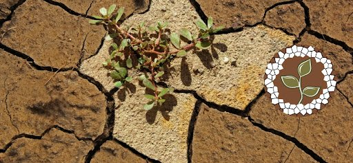 Food and Agriculture Organization of the United Nations (FAO) Photo Contest on Salt-Affected Soils 2021 ($1,000 prize)